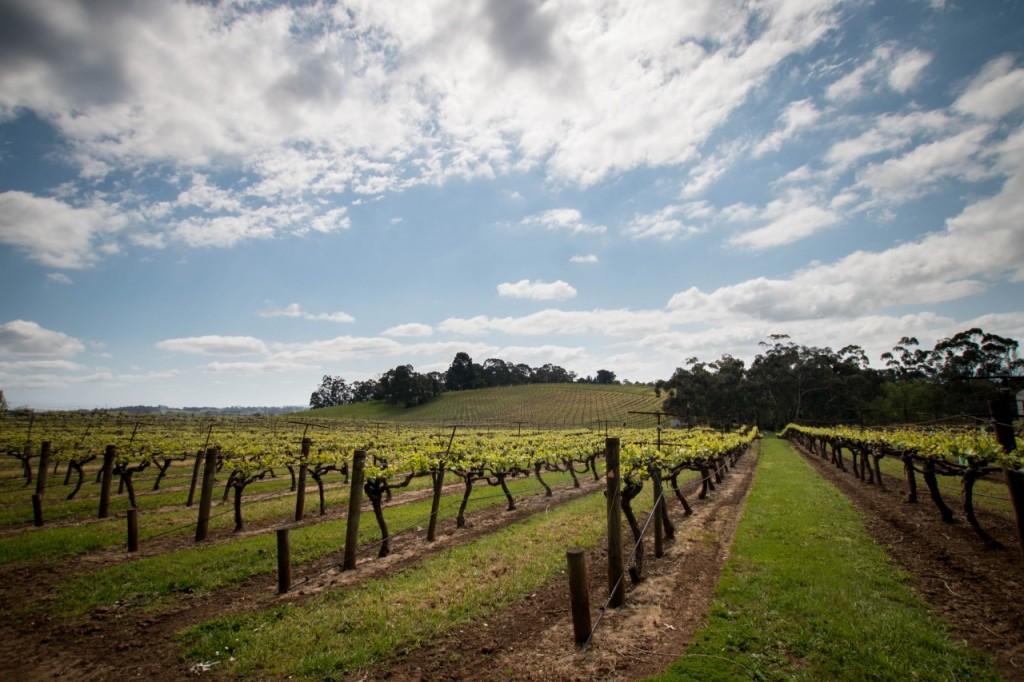 dws-seville_estate-winery-visit-11