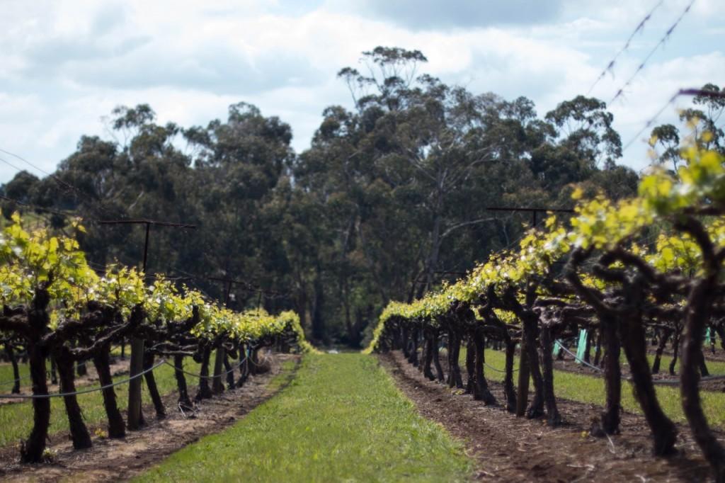 dws-seville_estate-winery-visit-18