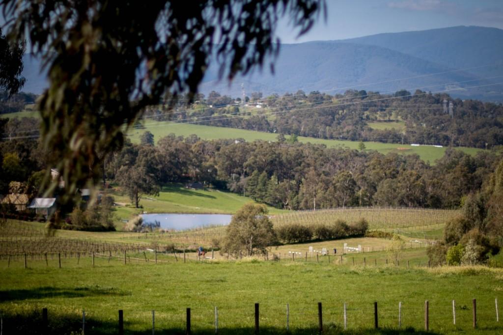 dws-seville_estate-winery-visit-39